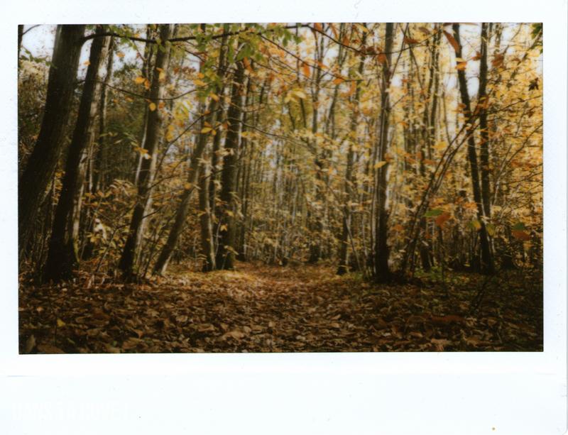 J'adore la forêt en automne !